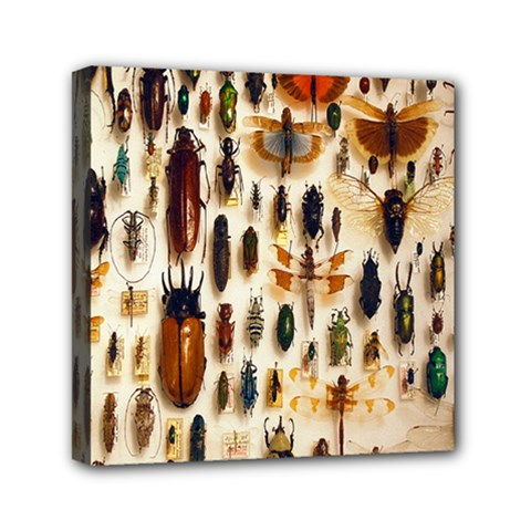 Insect Collection Mini Canvas 6  X 6  by Nexatart