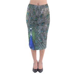 Peacock Four Spot Feather Bird Midi Pencil Skirt by Nexatart