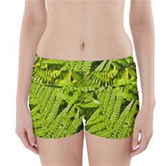 Fern Nature Green Plant Boyleg Bikini Wrap Bottoms by Nexatart
