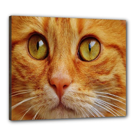 Cat Red Cute Mackerel Tiger Sweet Canvas 24  X 20  by Nexatart