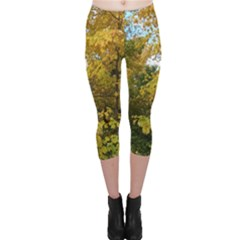 Vermont Fall Trees Capri Leggings  by SusanFranzblau