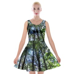 Looking Up Into Trees Velvet Skater Dress