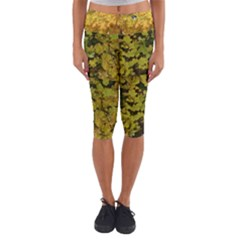 Yellow And Green Leaves Capri Yoga Leggings by SusanFranzblau