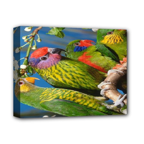 Beautifull Parrots Bird Deluxe Canvas 14  X 11
