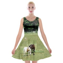 Horses, bunny, and sleeping kitty Velvet Skater Dress