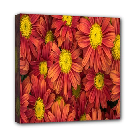 Flowers Nature Plants Autumn Affix Mini Canvas 8  X 8  by Nexatart