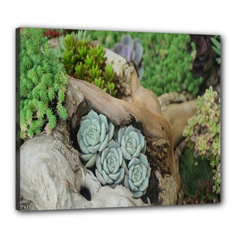 Plant Succulent Plants Flower Wood Canvas 24  X 20  by Nexatart