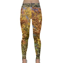 Autumn Trees In A Bright Blue Sky With Kitty Classic Yoga Leggings by SusanFranzblau