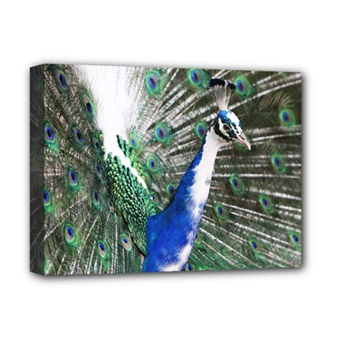 Animal Photography Peacock Bird Deluxe Canvas 16  X 12   by Amaryn4rt