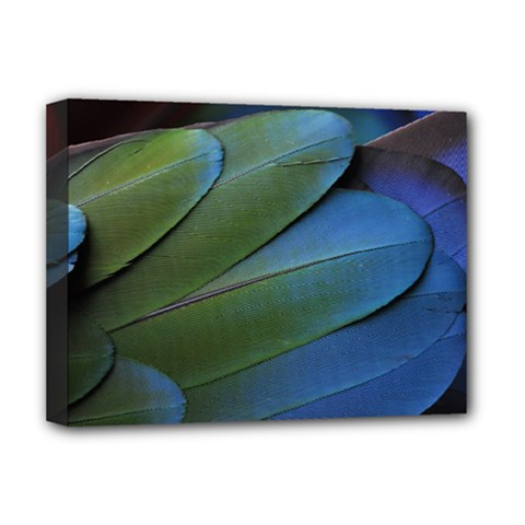 Feather Parrot Colorful Metalic Deluxe Canvas 16  X 12   by Amaryn4rt