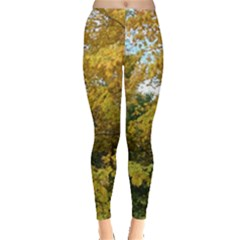 Tree With Yellow Leaves Leggings  by SusanFranzblau