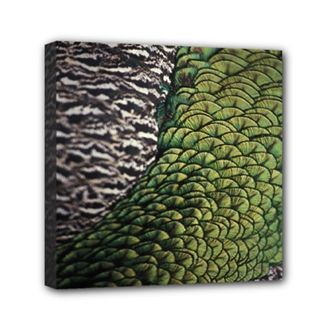 Bird Feathers Green Brown Mini Canvas 6  X 6  by Alisyart