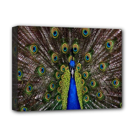 Bird Peacock Display Full Elegant Plumage Deluxe Canvas 16  X 12   by Amaryn4rt