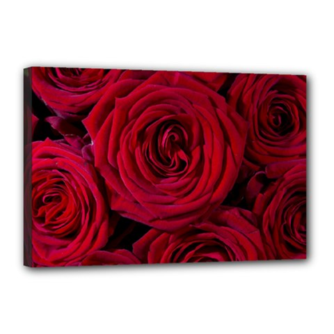 Roses Flowers Red Forest Bloom Canvas 18  x 12