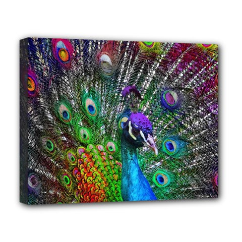 3d Peacock Pattern Deluxe Canvas 20  X 16   by Amaryn4rt