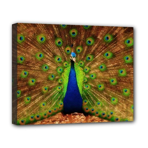 3d Peacock Bird Deluxe Canvas 20  X 16   by Amaryn4rt