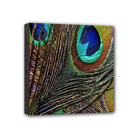 Peacock Feathers Mini Canvas 4  X 4