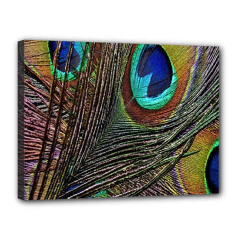 Peacock Feathers Canvas 16  X 12