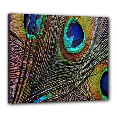 Peacock Feathers Canvas 24  X 20