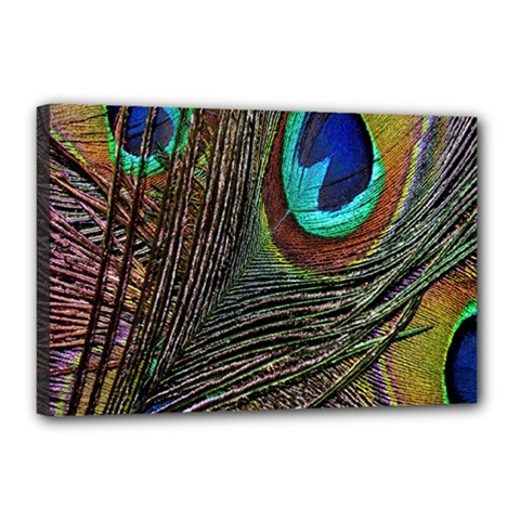 Peacock Feathers Canvas 18  X 12
