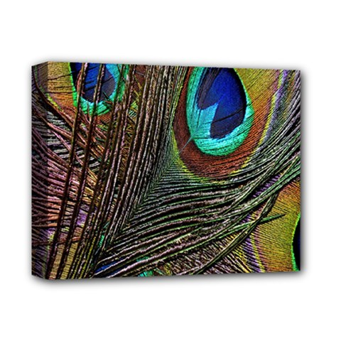 Peacock Feathers Deluxe Canvas 14  X 11