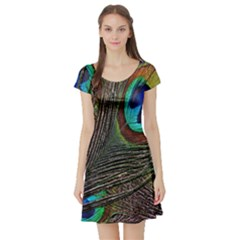 Peacock Feathers Short Sleeve Skater Dress