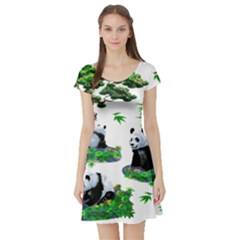 Cute Panda Cartoon Short Sleeve Skater Dress by Simbadda