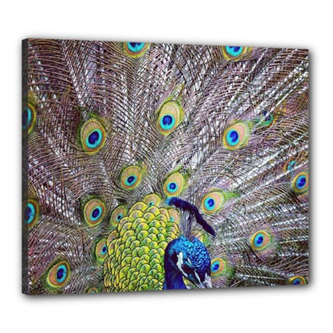 Peacock Bird Feathers Canvas 24  X 20  by Simbadda