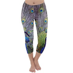 Peacock Bird Feathers Capri Winter Leggings  by Simbadda