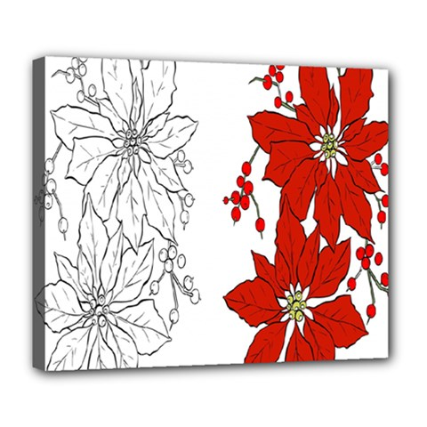 Poinsettia Flower Coloring Page Deluxe Canvas 24  X 20   by Simbadda