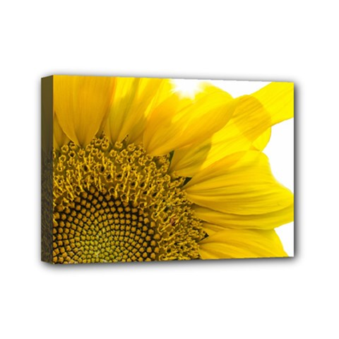 Plant Nature Leaf Flower Season Mini Canvas 7  X 5  by Simbadda