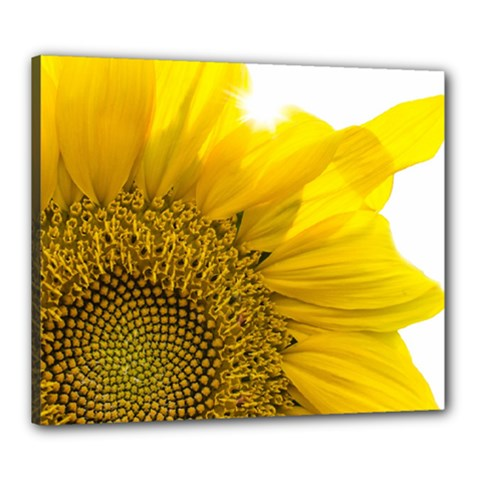 Plant Nature Leaf Flower Season Canvas 24  X 20  by Simbadda
