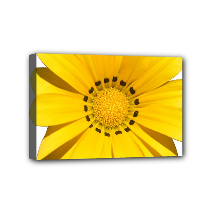 Transparent Flower Summer Yellow Mini Canvas 6  x 4