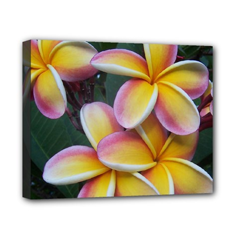Premier Mix Flower Canvas 10  X 8  by alohaA