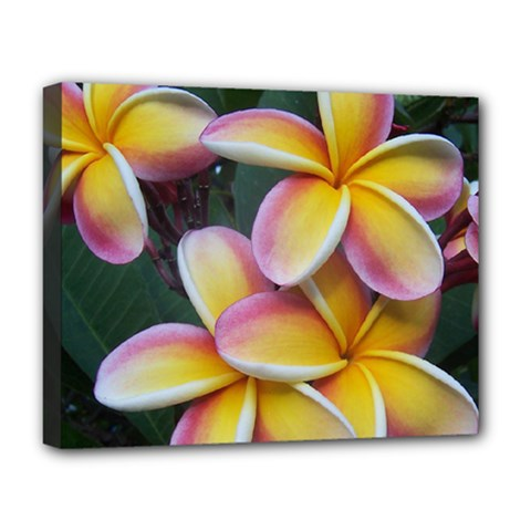 Premier Mix Flower Deluxe Canvas 20  X 16   by alohaA