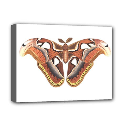 Butterfly Animal Insect Isolated Deluxe Canvas 16  X 12   by Simbadda