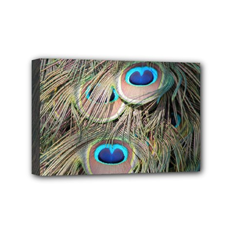Colorful Peacock Feathers Background Mini Canvas 6  X 4  by Simbadda
