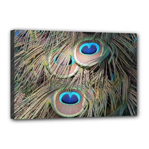 Colorful Peacock Feathers Background Canvas 18  X 12