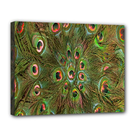 Peacock Feathers Green Background Canvas 14  X 11  by Simbadda