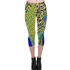 Graphic Painting Of A Peacock Capri Leggings  by Simbadda