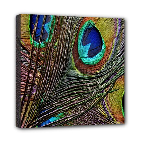Peacock Feathers Mini Canvas 8  X 8