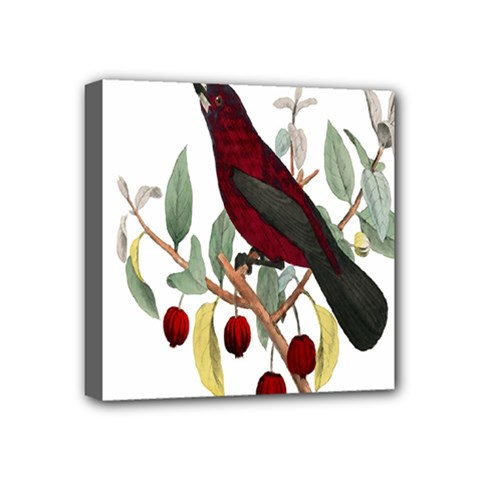 Bird On Branch Illustration Mini Canvas 4  X 4  by Amaryn4rt