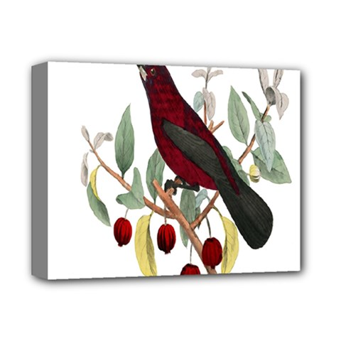 Bird On Branch Illustration Deluxe Canvas 14  X 11  by Amaryn4rt