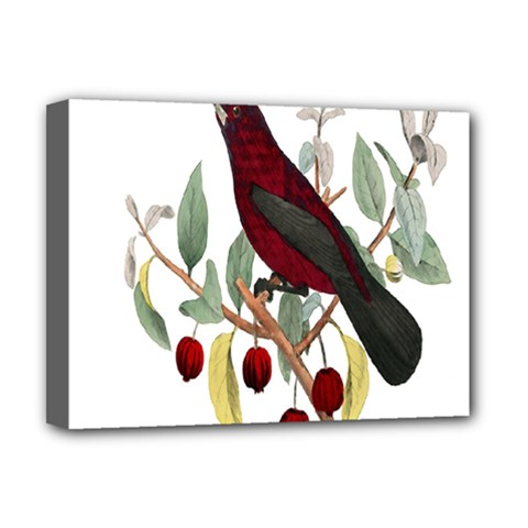 Bird On Branch Illustration Deluxe Canvas 16  X 12   by Amaryn4rt