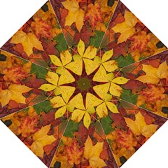 Colorful Autumn Leaves Leaf Background Folding Umbrellas by Amaryn4rt