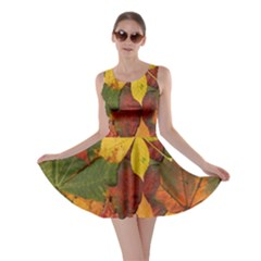 Colorful Autumn Leaves Leaf Background Skater Dress by Amaryn4rt