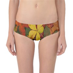 Colorful Autumn Leaves Leaf Background Classic Bikini Bottoms by Amaryn4rt