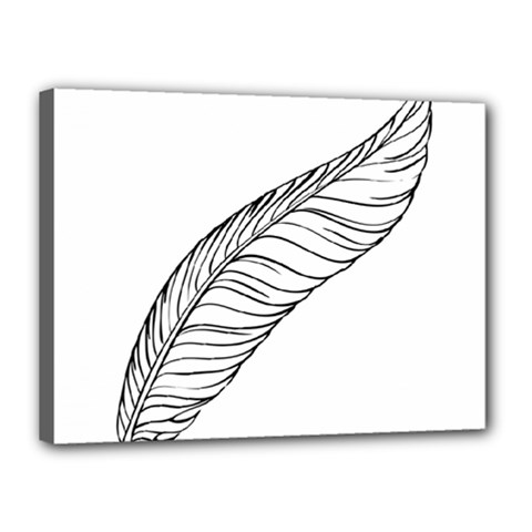 Feather Line Art Canvas 16  X 12  by Simbadda