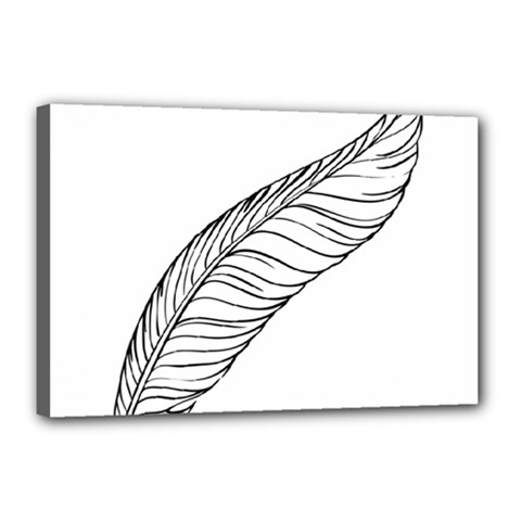 Feather Line Art Canvas 18  X 12