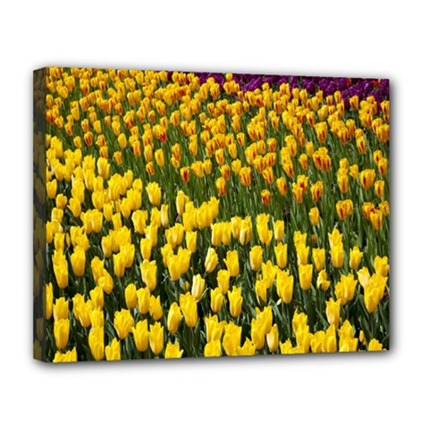 Colorful Tulips In Keukenhof Gardens Wallpaper Canvas 14  X 11